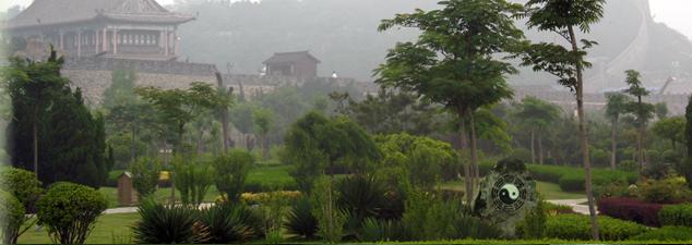 Traditioneel Chinese Geneeskunde
